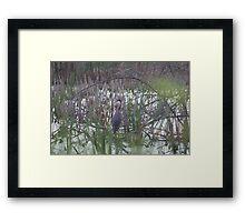Hidden in the Brush Framed Print