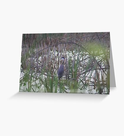 Hidden in the Brush Greeting Card