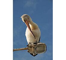Pelican on Light Pole 2 Photographic Print