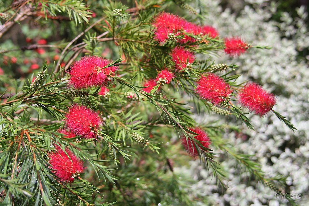 Bottle Brush by CMCetra