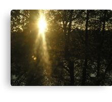 Shining thru Canvas Print