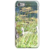 Black Swan Parents with Cygnets  iPhone Case/Skin