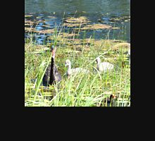 Black Swan Parents with Cygnets  Unisex T-Shirt