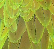 Macaw Feathers by taiche