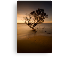 the contemporary tree Canvas Print