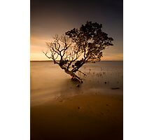 the contemporary tree Photographic Print