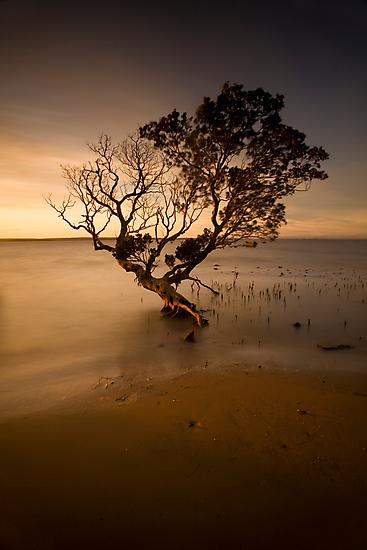 the contemporary tree by Tony Middleton