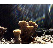 Fungal Flarey Webs Photographic Print