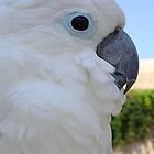 Blue-Eyed Cockatoo by taiche