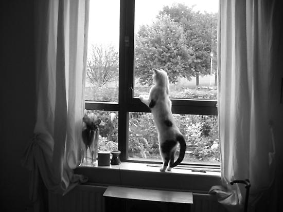 Cat Dancing by Ladymoose