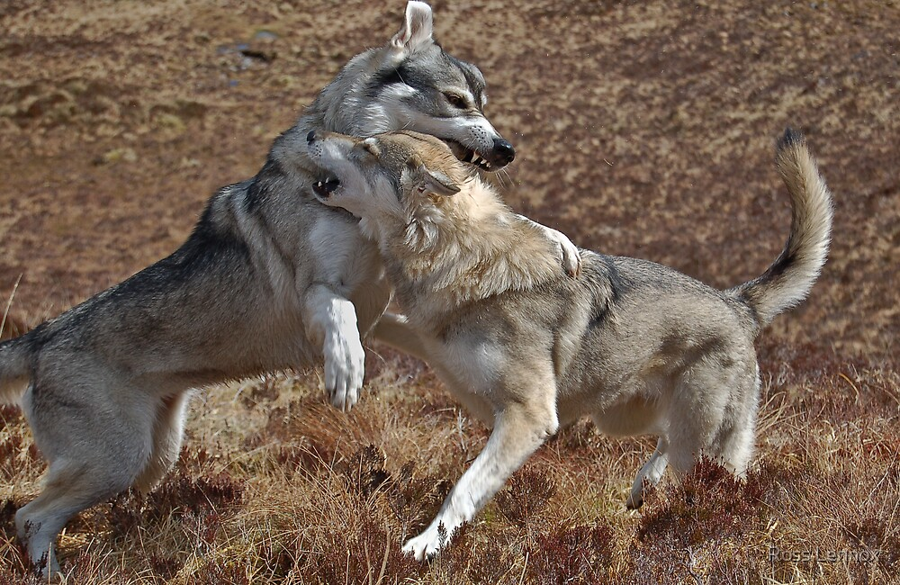 Cry Wolf by Ross Lennox
