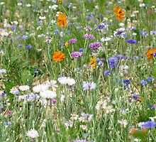 a field of wild flowers by viaterra-photos