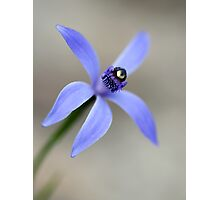 Blue Fairies Orchid Photographic Print