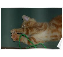 Rescue Kitten #1 Poster