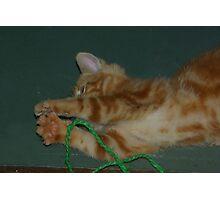 Rescue Kitten #1 Photographic Print
