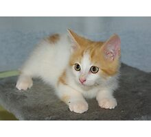 Rescue Kitten #2 Photographic Print