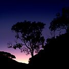Sunset Palm cove by sparrowdk