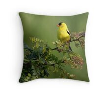 Goldfinch on Locust Throw Pillow