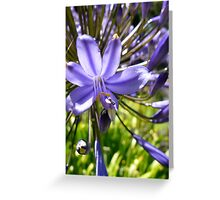 Botanical - Blue Greeting Card