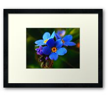 Little Beauty Framed Print