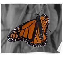 Monarch at Rest Poster