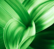Magic Green Lines by Katherine Maidle