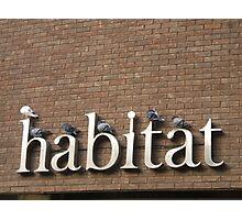habitat Photographic Print
