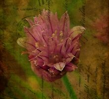 Chives blossom by Yvonne Müller