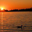 An Evening Swim by NancyC