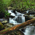 Smoky Mountain Stream by Jason Vickers
