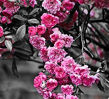 Blossom Rose Tree by Svetlana Sewell