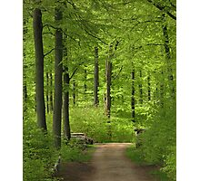 Beech wood in spring Photographic Print
