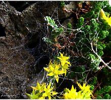 Spiders web by Hazel phillips