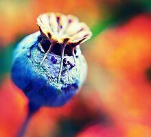 POP 'E's seed dispensary by Julian Holtom