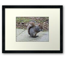 Who Ate All The Nuts?  Framed Print
