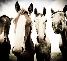 Meet The Mares by Polly x