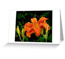 a daylily for today Greeting Card