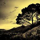 From Castlehead by David Robinson