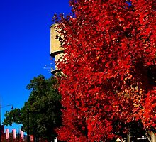 Autumn Colours - Wodonga 2015 by RalphOlsson