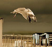 Seagull by PhotomasWorld