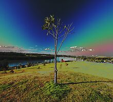 Southern Cross Tree by muz2142