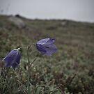 Wild Newfoundland Beauty by Ryan Piercey