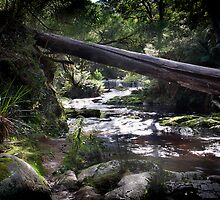 The Weir, Halls Falls, Tasmania by Sue Wilson (Kane)