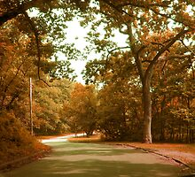 Autumn Drive Through The Park by Linda Miller Gesualdo