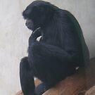 The Thinker... Monkey Style. by heathernicole00