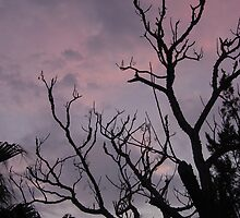 Purple skies by triciamary