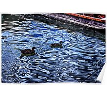 Floating Ducks Danube River Poster