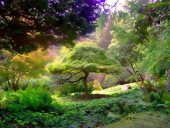 Bonsai Dreams for my Day by Judi Taylor