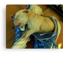 nike pup Canvas Print