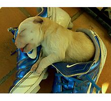 nike pup Photographic Print